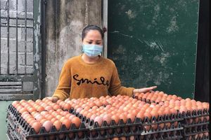 Tình hình bi đát, người chăn nuôi phải hủy trứng gà giống