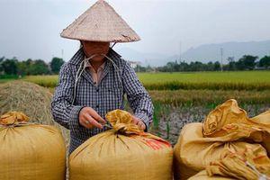 Mở tờ khai xuất khẩu gạo nửa đêm: Có tiêu cực không?
