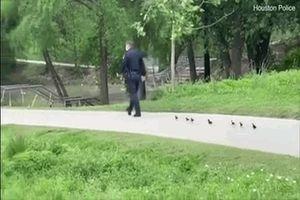 Vịt con đi lạc được cảnh sát dẫn đi tìm mẹ khiến nhiều người thích thú