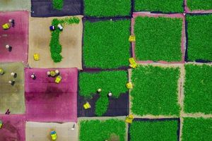 2 bức ảnh của nhiếp ảnh gia Việt lọt top ảnh đẹp nhất thế giới
