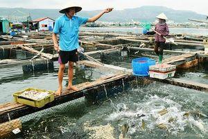Phê duyệt nhiệm vụ lập Quy hoạch bảo vệ và khai thác nguồn lợi thủy sản