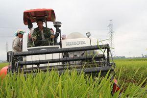 Yên Thành cán đích nông thôn mới: Quê lúa đón thành quả ngọt ngào