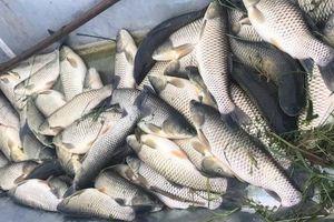 Vụ cá chết trên Sông Mã: Nhiều chỉ tiêu vượt ngưỡng cho phép