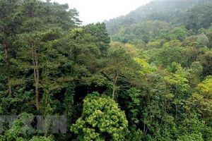 Hai phụ nữ ở Quảng Trị bị lạc trong rừng đã về nhà an toàn