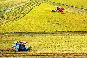 Hạt gạo với sứ mệnh xây dựng miền Tây giàu đẹp