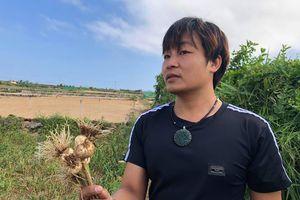 Phát triển nông nghiệp sạch trên 'đảo tỏi' Lý Sơn