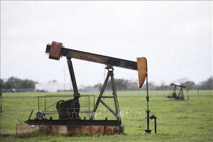 Dừng gần 300 thỏa thuận khai thác dầu khí tại Montana, Mỹ
