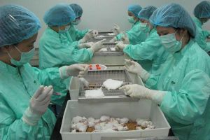 Việt Nam thành công bước đầu trong sản xuất vắc xin ngừa Covid-19