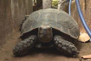 Làm rõ nguồn gốc 127 con rùa nuôi nhốt trong nhà 1 hộ dân