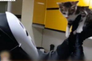 YouTuber Hàn bị tố bỏ đói thú cưng để 'con vật dễ thương khi lên hình'