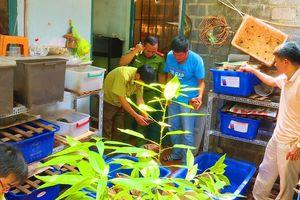 Đắk Lắk: Tạm giữ 127 cá thể rùa chưa rõ nguồn gốc