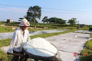 Nghệ An: Một ngày trên cánh đồng muối đầu mùa