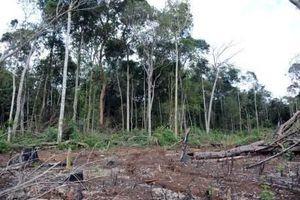Tiếp tay, nhận hối lộ cho việc hủy hoại đất lâm nghiệp ở Đắk Nông