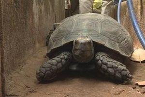 Phát hiện một hộ gia đình nuôi nhốt 127 cá thể rùa trong nhà