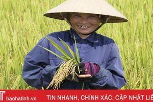 3 giống lúa mới trĩu bông trên cánh đồng Hương Khê