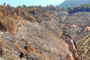 Chủ tịch Quảng Nam yêu cầu khởi tố, điều tra vụ cháy 32 ha rừng