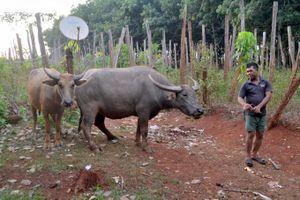 Dân Bình Phước cất nhà nhờ dự án nuôi trâu