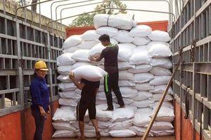 Đấu thầu lại gạo dự trữ: Nâng mức bảo lãnh dự thầu, tránh vết xe đổ