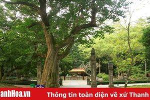Khám phá rừng Lam Kinh