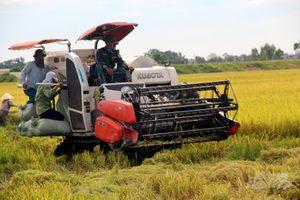 Xứ Thanh được mùa nhờ liên kết sản xuất, tiêu thụ nông sản