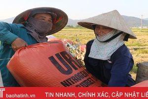 Thu mua lúa tươi tại ruộng, doanh nghiệp - nông dân Hà Tĩnh cùng vui