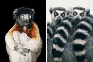 Vẻ đẹp của 10 loài động vật có nguy cơ tuyệt chủng