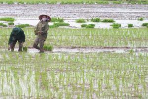 Mưa lụt lớn dồn dập cuối vụ mùa và hè thu, ứng xử thế nào