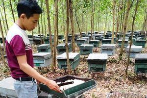 Hơn 200 tổ ong chết chưa rõ nguyên nhân