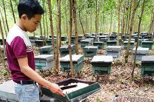 Công an vào cuộc vụ hơn 200 tổ ong chết đồng loạt nghi bị đầu độc