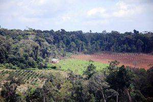 Vụ hủy hoại đất lâm nghiệp tại Đắk Nông: Bắt 3 đối tượng để điều tra về hành vi nhận hối lộ