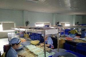 Đắk Nông: Tháo gỡ khó khăn cho hoạt động xuất khẩu