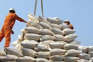 Gia tăng giá trị hạt gạo - Kỳ II: Điểm tựa vững chắc