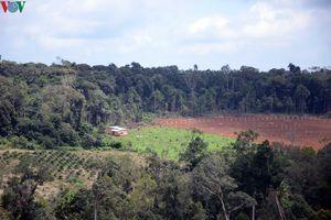 Đăk Nông bắt 3 đối tượng nhận hối lộ trong vụ hủy hoại đất lâm nghiệp