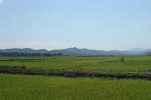Krông Ana (Đắk Lắk): Tiềm năng phát triển thương hiệu lúa gạo