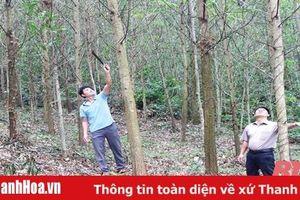 Phát triển kinh tế đồi rừng ở xã Thành Công
