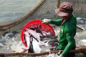 Thị trường nào cho ngành hàng cá tra An Giang?