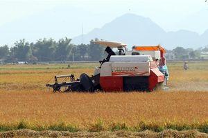 Từ thành công của vụ đông xuân, ưu tiên hiệu quả sản xuất vụ hè thu 2020