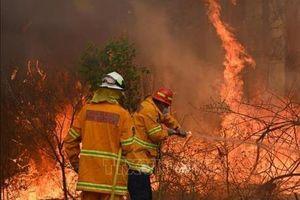 COVID-19 cản trở nỗ lực tái thiết sau thảm họa cháy rừng ở Australia