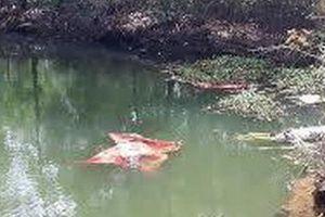 Thương tâm 2 chị em đuối nước dưới ao nhà ông nội