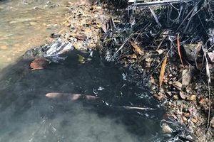 Thanh tra, kiểm tra đột xuất về bảo vệ môi trường không cần thông báo