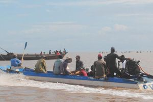 Đổ xô khai thác nghêu giống khu vực Vườn quốc gia Mũi Cà Mau