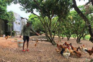 Chống nắng nóng cho đàn vật nuôi