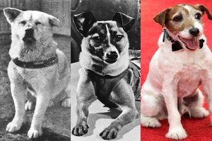 Điểm danh những chú chó 'huyền thoại' trong lịch sử thế giới