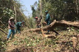 Hiểm họa cháy rừng vì dọn thực bì