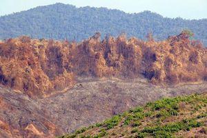 Chuyển hồ sơ vụ cháy rừng ở Quảng Nam sang cơ quan Công an