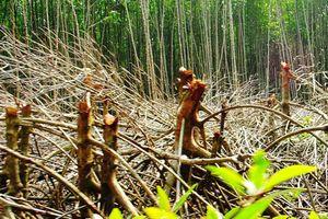 Di dời dân cư trú trái phép ra khỏi Vườn Quốc gia Mũi Cà Mau
