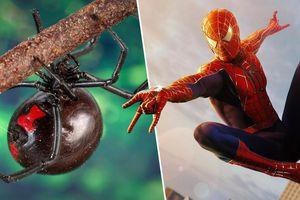 3 trẻ em cho nhện kịch độc cắn vì muốn trở thành Người Nhện như phim