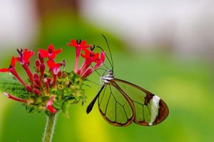 Vẻ đẹp kỳ diệu trên đôi cánh của một số loài bướm