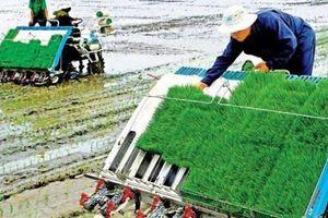 Đổi mới sáng tạo 'mở đường' cho những thành tựu quan trọng trong nông nghiệp