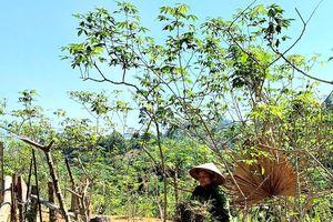 Mặt trận Tổ quốc tỉnh Nghệ An sẽ giám sát các vấn đề liên quan Dự án Thủy điện Hủa Na